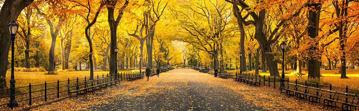 fall-leaves-in-park